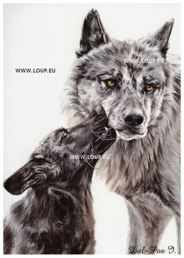 Pack cartes d'Art du Klan du Loup