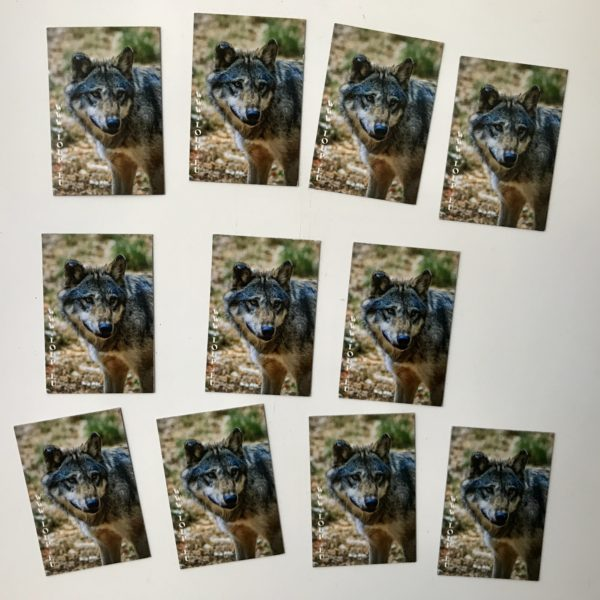 Magnet Loup